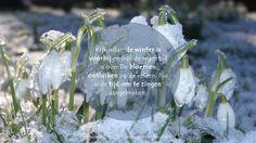 Kijk maar, de winter is voorbij en ook de regentijd is over. De bloemen ontluiken op de velden. Nu is de tijd om te zingen aangebroken. Hooglied 2: 11, 12a  #Voorjaar  http://www.dagelijksebroodkruimels.nl/hooglied-2-11-12a/