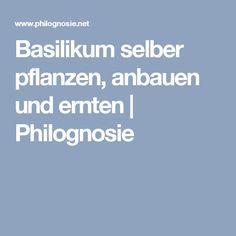 Basilikum selber pflanzen, anbauen und ernten | Philognosie Garden Plants, Basil, Tutorials
