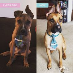Finn has to rewear his Easter outfit #mylittleeasterbunny #thenandnow #timehop #handsomedog