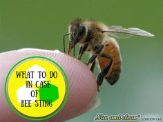 What to do in case of bee sting?