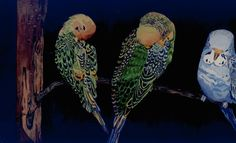 parakeets - in watercolor