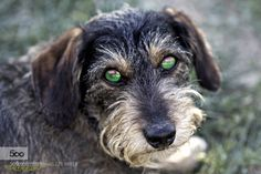Dog by giuseppepeppoloni. Please Like http://fb.me/go4photos and Follow @go4fotos Thank You. :-)