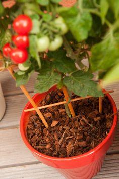 Le paillis - botanic® Articles, Gardens, Mulches, Plants, Interview, Spring