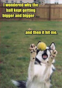 visit www.amazingdogtales.com for the best funny dog joke pics,inspirational dog stories and dog news.... TOP 44 Funny Dog Memes