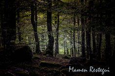 IMG_2566   Flickr: Intercambio de fotos Bosque de Polaciones ,Cantabria, España.