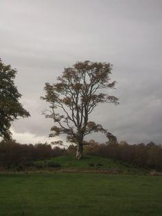 Perthshire tree