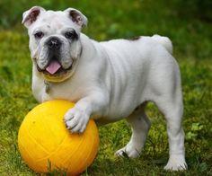 Lets Play Football