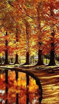 The post (notitle) autumn scenery appeared first on Trendy. Beautiful World, Beautiful Places, Beautiful Pictures, Amazing Places, Foto Picture, Autumn Scenes, All Nature, Fall Pictures, Belle Photo