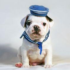 Puppy Sailor