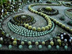Succulents & cacti...this is gorgeous!