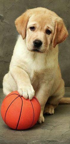 Golden Retriever Mix, Labrador Retriever, Labradors, Labs, Oregon, Dog Cat, Friends, Animals, Pet Dogs