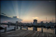 ALEX NORTH  Gulf Coast Harbour
