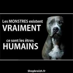 Monsters really exist.they are humans. Types Of Animals, Animals And Pets, Funny Animals, Human Nature Quotes, Citation Nature, Summer Nature Photography, Animal Protection, Vegan Animals, Animal Rights