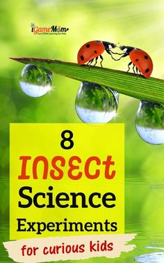 Insect science experiments for curious kids. Hands-on activities learn bugs life cycles: ants, butterfly, ladybug. Outdoor STEM experiments in the backyard and fun science fair project ideas
