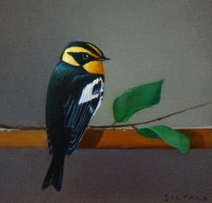 Warbler by Sarah Siltala