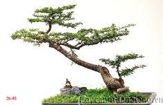 Phân loại Bonsai