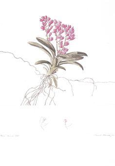 FLORENCE, Hercule - Pará, Janvier 1829. [Orchidaceae. Rodriguesia secunda H.B.K.] -  1829 -  Aquarela e nanquim sobre papel  34,7 x 24,6 cm -  Coleção Arquivo da Academia de Ciências (São Petersburgo)