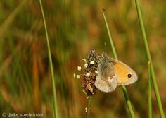 Moth, Insects, Animals, Animales, Animaux, Animal, Animais