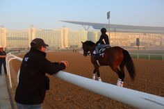 CaliforniaChrome ast trainer Alan Sherman checks out the competition at Meydan today as KeenIce passes. #DWCC16