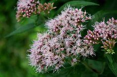 Wild blossom by irrlicht71.deviantart.com on @deviantART