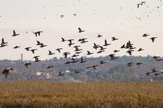 BIRD CALL! #Mallorca wetlands are home to 30,000 birds this winter #Environment #Mallorca