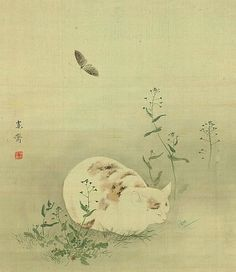 Mori Kansai Cat and Butterfly 19th century