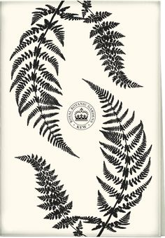 The Royal Botanic Gardens, Kew, Ferns Black Tea Towel