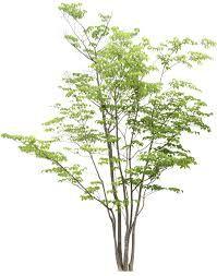 「樹」的圖片搜尋結果