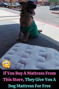 #Buy #Mattress #Store #Dog #Free