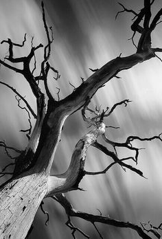 black and white photography trees Monochrome Photography, Black And White Photography, Landscape Photography, Nature Photography, Foto Picture, Ansel Adams, Black And White Pictures, Photo Black White, White Art