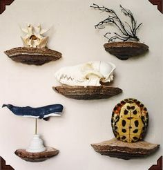 Such awesome shelves... if I ever get my cottage these are going in it!