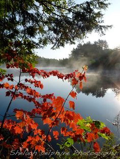Scarlet in the Mist by Shelagh Delphyne