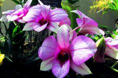 Pink Orchidaceae in Botanic garden. Amazing Photography, Art Photography, Orchidaceae, Just Amazing, Some Pictures, Great Photos, Botanical Gardens, Washington Dc, Canon