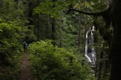 Hiking the Seclusive Siuslaw National Forest: Upper Kentucky Falls