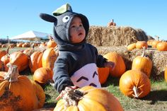 Totoro costume!