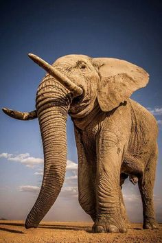 Elephant walks across a dry lake in Amboseli National Park, Kenya ©Pieter Ras Photo Elephant, Asian Elephant, Elephant Love, Elephant Head, Large Animals, Animals And Pets, Cute Animals, Elephants Photos, Save The Elephants