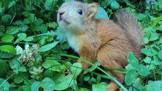 squirrel part 3