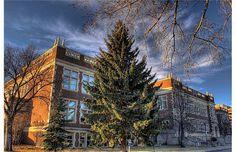 100.University of Alberta