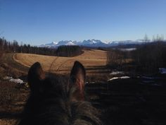View, Bodø, Norway Horse Pictures, Norway, Horses, Mountains, Awesome, Nature, Travel, Animals, Voyage