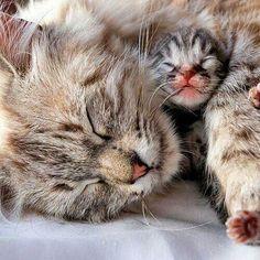 Momcat & her Baby