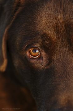 Those soulful eyes.