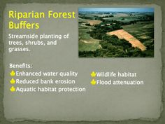 Riparian Forest Buffers enhance water quality and prevent erosion. They assist in filtering out non-source point pollution. Slide courtesy of the USDA National Agroforestry Center.