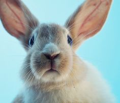 """Bunny"" by Serch on Flickr - Cute Bunny"