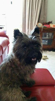 Cathy MacDonald of Cairn Terrier Fan Club on Facebook.