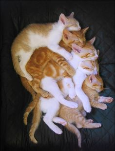 a stack of orange cats.