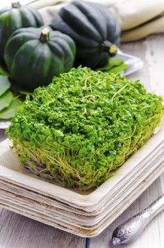 16 microgreens you can grow and harvest every 7-14 days * Lettuce * Spinach * Tatsoi * Radish greens * Peas * Cabbage * Basil * Watercress * Parsley * Beet greens * Kale * Mustard * Spinach * Arugula * Endive * Broccoli