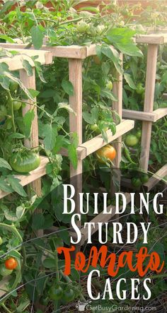 If you grow tomatoes, you need sturdy tomato cages - those flimsy metal tomato cages are pathetic. Here's a plan to build your own sturdy tomato cages. #hydroponicstomatoes