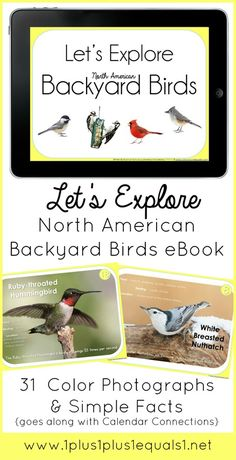 Backyard Birds eBook ~ features 31 different backyard birds from across North America