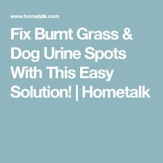 Fix Burnt Grass & Dog Urine Spots With This Easy Solution!   Hometalk