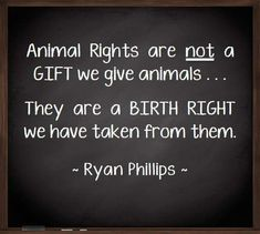 Animal rights are not a gift we give